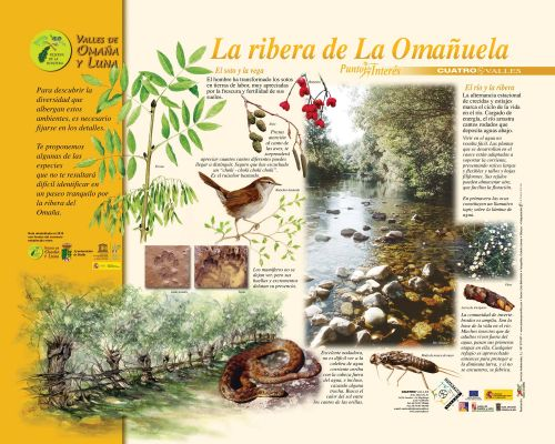 PINRibera Omañuela