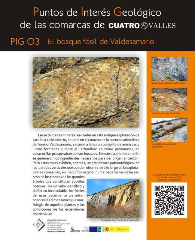 El bosque fósil de Valdesamario